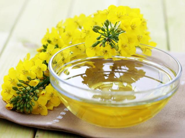 Canola oil,Belly fat,Diet