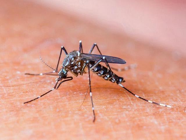 dengue,Bhopal,blood platelet