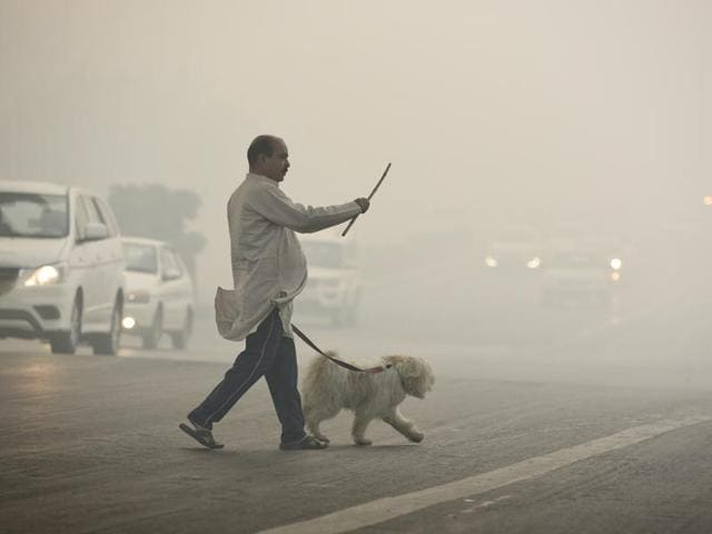 The post- Diwali smog is taking a toll on the health of dogs in the Capital.