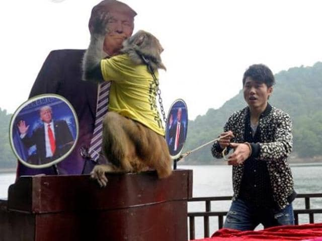 """The simian seer, Geda, wearing a yellow shirt emblazoned with his title of """"king of prophets"""", was given a chance to pick between life-sized cut-outs of Republican Trump and his Democratic challenger Hillary Clinton.(AFP)"""