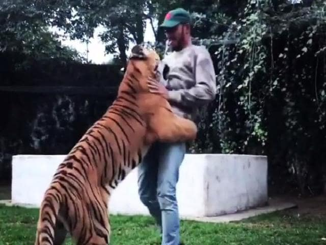 Lewis Hamilton has known this Royal Bengal Tiger, Nicole, at the Black Jaguar-White Tiger Foundation in Mexico since she was a two-month baby.