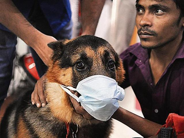 It is not just Gurgaon residents but also their furry friends who are facing the brunt of the dense blanket of smog that has engulfed Delhi and its neighbouring cities since Diwali.