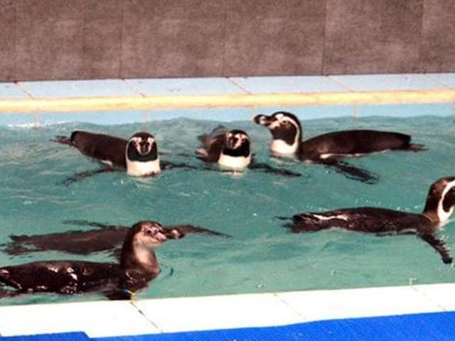 The advisory said these penguins in Byculla zoo cannot be kept in what is essentially a baby pool