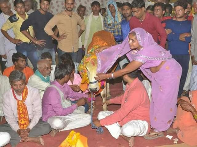 The grand wedding was held as per Hindu traditions at Jarkhod cow shelter in Deeg town of Bharatpur district in Rajasthan on Saturday.