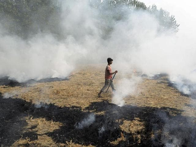 A farm labourer burns paddy stubble in a field on the outskirts of Jalandhar in Punjab.(AFP Photo)