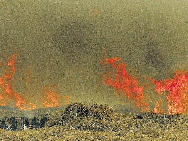 Stubble being burned at a field near Raikot in Ludhiana on Sunday.