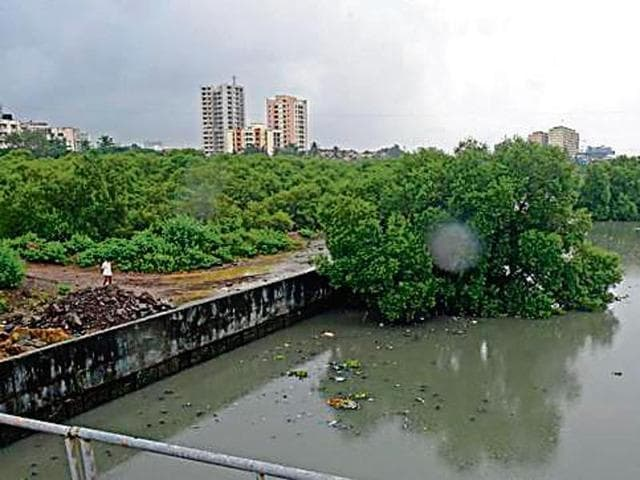 A day after Hindustan Times reported cutting of mangroves along Vashi creek at Kopar Khairane, forest officials visited and inspected the site.