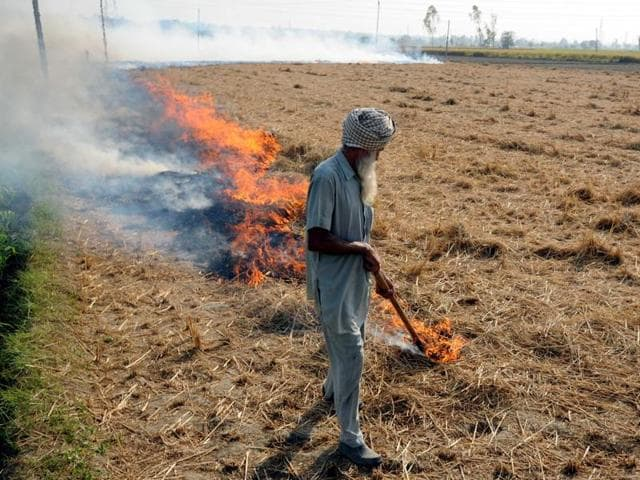 Despite the ban, a farmer burning paddy stubble in a field near the National Highway-64 Pasiyana village in Patiala on Thursday.(Bharat Bhushan/HT Photo)