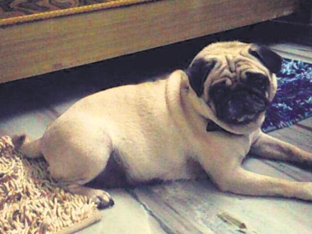 arrested for stealing cop's dog,Bhopal,crime