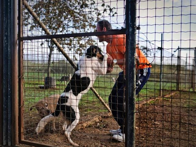 A prisoner at the high security Monsanto prison in Lisbon touches a dog at the jail's kennel on October 24, 2016. The prison, nestled in the city's highest point and largest green patch, runs a kennel staffed by inmates, and dubbed the
