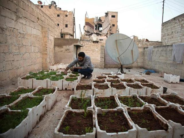 Syrian Amir Sendeh tends to plants in his small rooftop garden, in the Kalasseh district of the besieged eastern Aleppo.