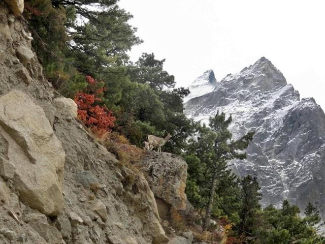 """A view of Nelong Valley in Uttarkashi district. The Uttarakhand high court observed that there was large-scale degradation of the ecology in the Himalayas and glaciers were """"rapidly depleting"""" in the state."""