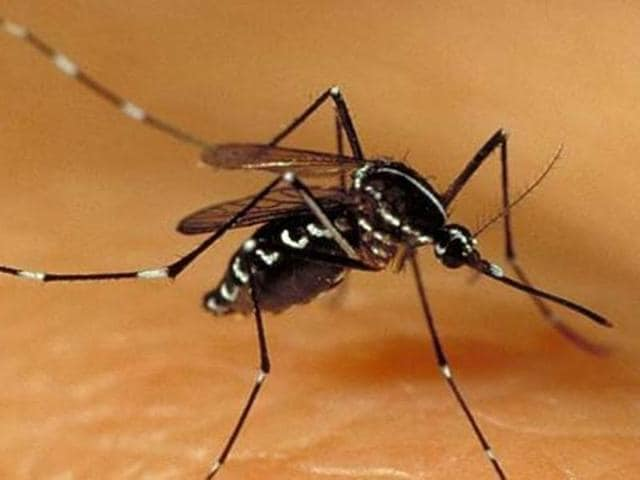 The move comes after HT reported on October 15 that private hospitals were not reporting cases of dengue regularly to the civic body.
