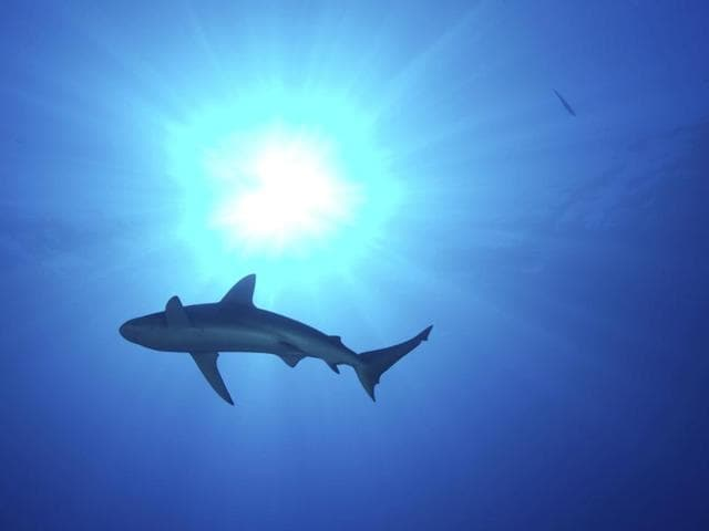 There are a handful of shark attacks on people off the coast of Western Australia every year, according to conservation groups.