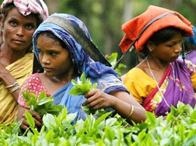 The Modi government's November 8 decision to discontinue the high-value notes, which accounted for more than 80% of the currency in circulation, put the owners of around 800 tea estates in Assam in a bind -- for 175 years, workers have been paid their wages in cash on Fridays or Saturdays.