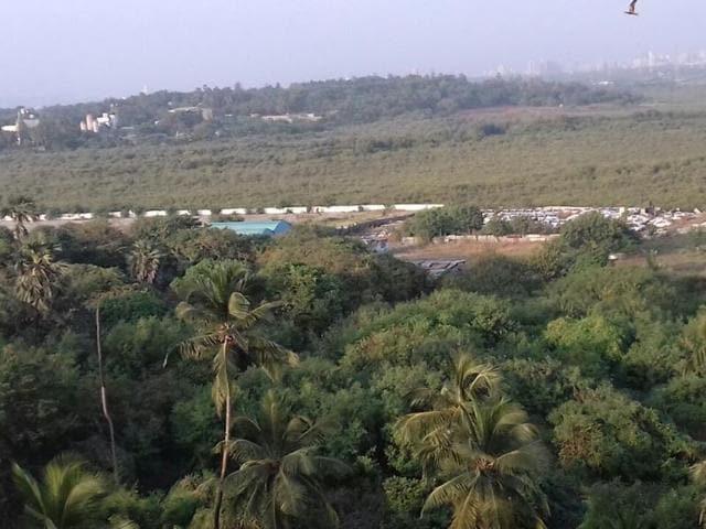 mumbai's mangroves,mumbai,mumbai news