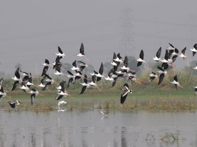 Gurgaon,bird flu,sultanpur park