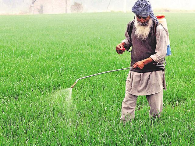 A farmer gives treatment to his paddy crop at village devigarh in Patiala.
