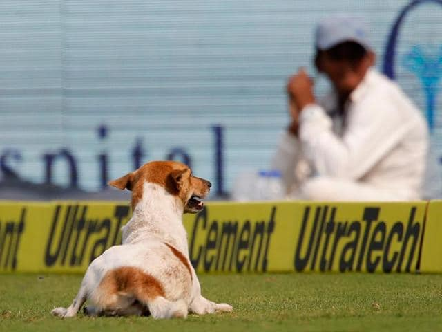 England's captain Alastair Cook (eft) and teammate Jonny Bairstow watch a dog running into the field on the first day of their second cricket test match against India in Visakhapatnam.