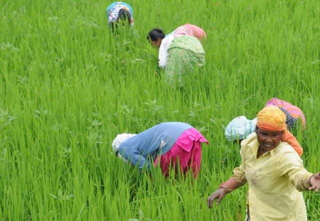 Jharkhand News,demonetisation,vagetable farmers