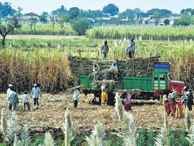 Cane prices,Sugarcane producer,Sugarcane