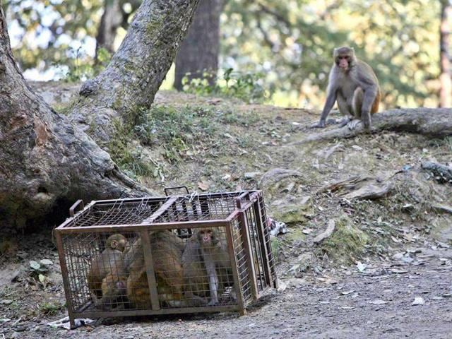 The wildlife wing of Himachal had last month sought the help of Arunachal Pradesh, Manipur and Nagaland to ease the problem the 2.07 lakh monkeys pose to its residents and farmlands.