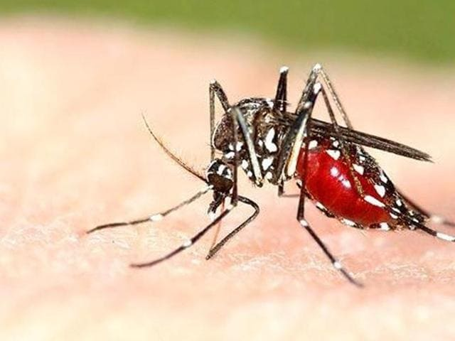 Dengue and chikungunya are transmitted by Aedes aegypti mosquito and symptoms of dengue patients co-infected with chikungunya are severe compared to those suffering from dengue.
