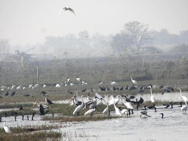 Migratory birds at a waterlogged field in Dhiggal village of Jhajjar. Among the 160 species, bird-watchers claimed to have spotted peregrine falcon — the fastest flying bird in the world.