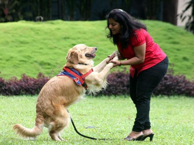 Pet dogs are able to remember what people did in the recent past. This kind of recall is known as episodic memory -- the ability to mentally travel back in time and remember details about an event.