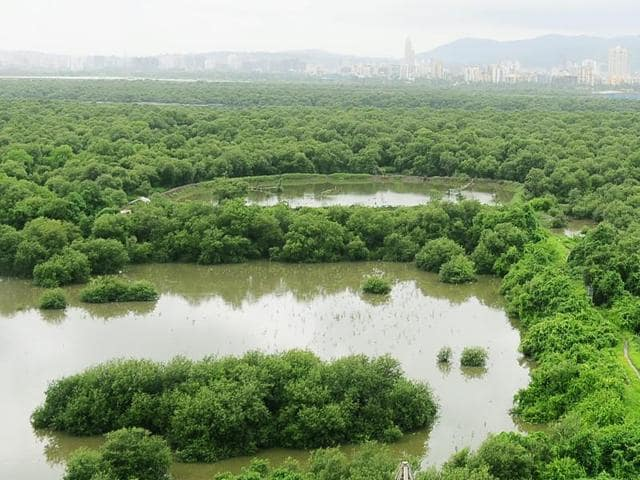 The lifespan of a mangrove tree is 45 to 50 years, but the trees that have withered here are not even 20 years old, said an activist.(HT FILE PHOTO FOR REPRESENTATION)