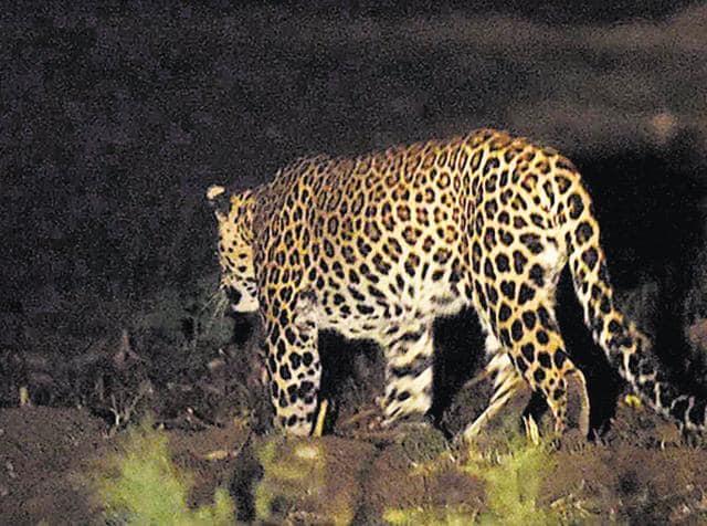 Leopard sighting Delhi,Yamuna Biodiversity Park,Wildlife