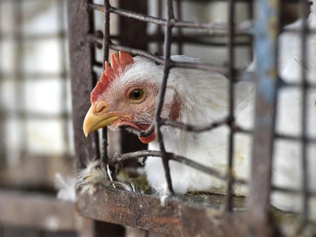 Bird flu,H5N8 virus,Bird flu in India