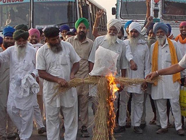 Protesting farmers burning an effigy of Punjab chief minister Parkash Singh Badal in Tarn Taran on Friday.