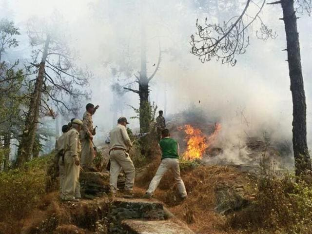 Forest department officials say the fire might have been ignited by poachers.
