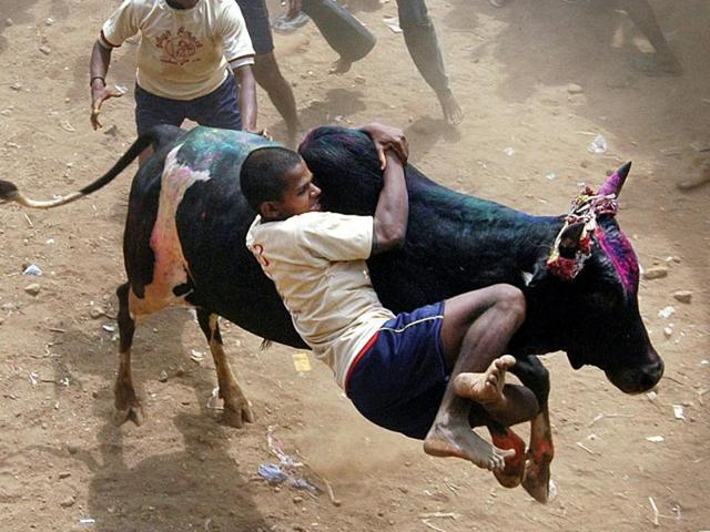Participants crowd to tackle a bull during the annual Jallikattu festival in Palemedu, about 25 kms from Madurai.