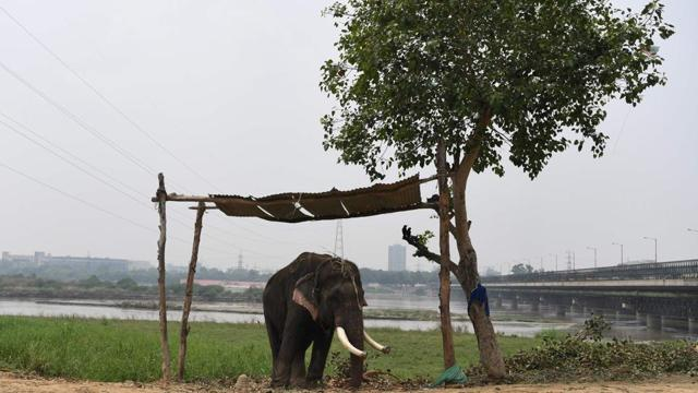 Photos: Delhi's last elephants await marching orders out of the capital
