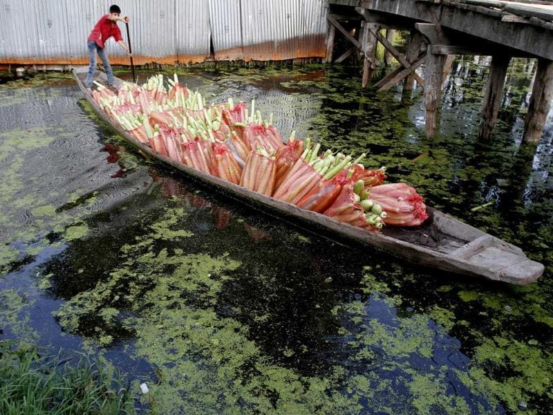A Kashmiri vegetable seller steers his boat on the Dal Lake in Srinagar.