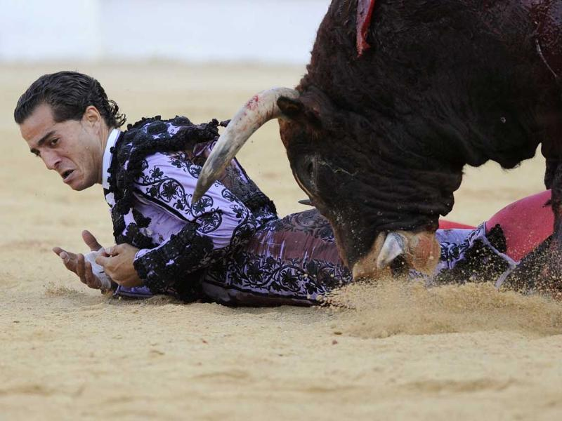 Spanish matador Ivan Fandino is pushed to the ground by a bull during a bullfight at the Begona Festival in Gijon, northern Spain.