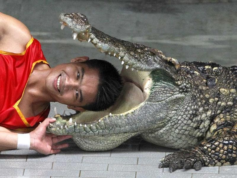 Zoo performer Theerapone Manolai smiles as he puts his head between the jaws of a crocodile during a performance for tourists at the Sriracha Tiger Zoo, about 120 km (74 miles) east of Bangkok. Kanthida Jantanct and Theerapone, both 28, from the province of Chaiyaphum, who have been crocodile performers at the zoo for almost ten years, earn at least 30,000 Baht (1,000 USD) per month for performing shows for at least 2,000 tourists, three times a day, to support their family.