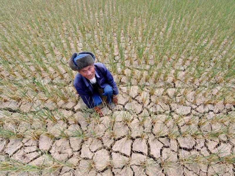 A Chinese farmer shows his drought-stricken fields in Guiyang, southwest China's Guizhou province.