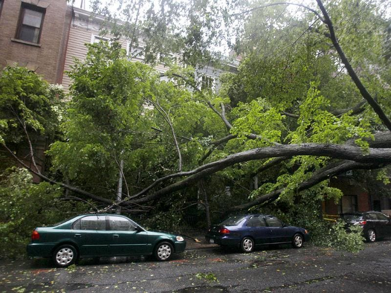 A large, fallen tree blocks a road while it rest on some cars in the Brooklyn borough of New York.