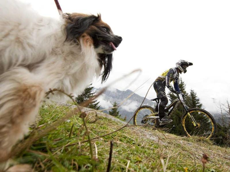 A rider cycles past a dog on his way to the start of the men's downhill training at the UCI Mountain Bike World Championships in Champery.