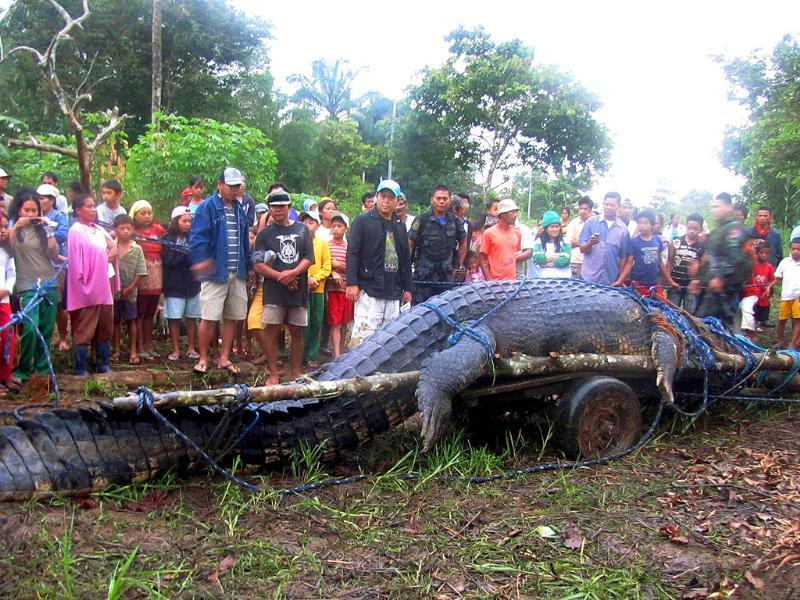 Residents look at a 21-feet (6.4 metres) saltwater crocodile after it was caught in Nueva Era in Bunawan town, Agusan del Sur, southern Philippines.