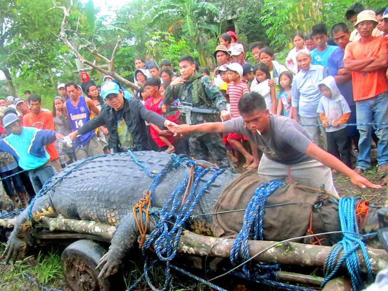 Residents use their hands to measure a 21-feet (6.4 metres) saltwater crocodile, which is suspected of having attacked several people, after it was caught in Nueva Era in Bunawan town, Agusan del Sur, southern Philippines.