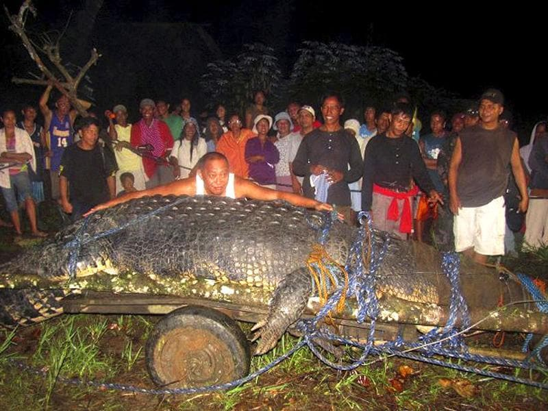 A man pretends to measure a huge crocodile which was captured by residents and crocodile farm staff along a creek in Bunawan in southern Philippines.