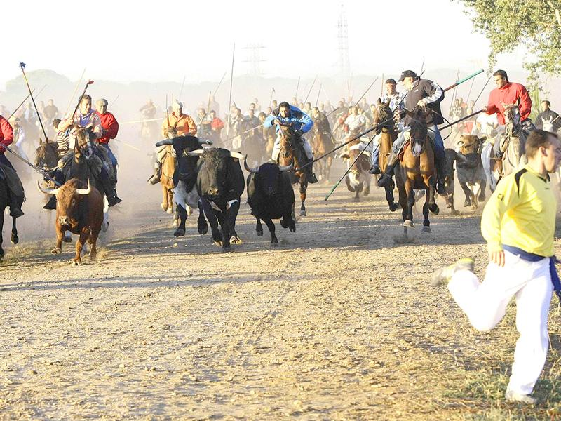 Men on horseback chase bulls during the