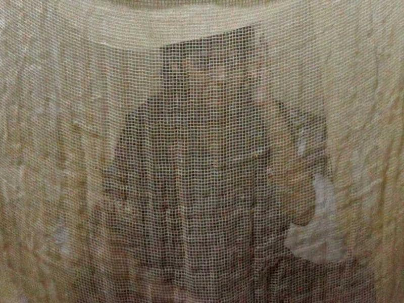 Fiza, 21, who was suffering from dengue fever, takes shelter under a mosquito net at the Mayo Hospital in Lahore.