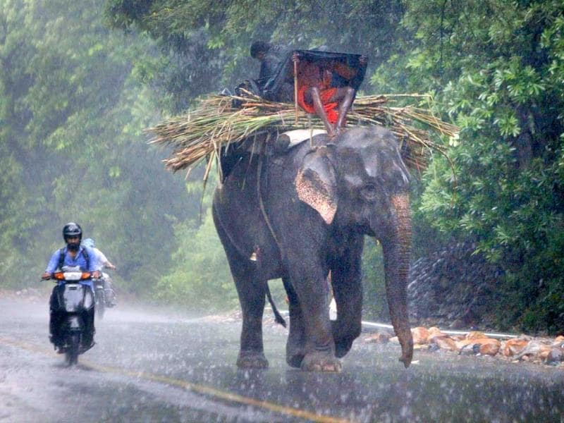 A mahout covers himself with a plastic sheet as he rides an elephant in heavy rain in Jammu.