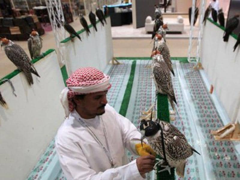 An Emirati man checks on the displayed hunting falcons at the 17th Abu Dhabi International Hunting and Equestrian exhibition (ADIHEX).