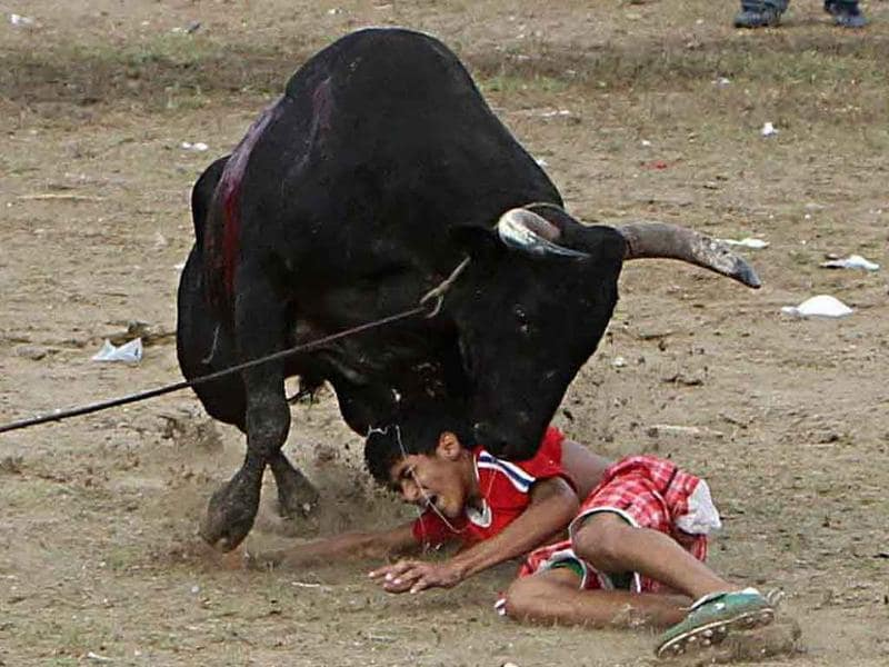 A boy cries out as a bull charged at him during a traditional Corraleja or bullfight in Since, Sucre province.